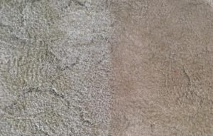 Carpet cleaning before after in Coorparoo, QLD home